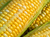 JLP Food Processing - Sweetcorn